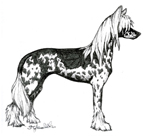 images/Razze/Sezione1/Chinese_Crested_Dog/thumb_Chinese Crested Dog.jpg