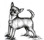 images/Razze/Sezione4/Chihuahua_Pelo_Corto/thumb_Chihuahua.jpg