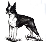 images/Razze/Sezione7/Boston_Terrier/thumb_Boston Terrier.jpg